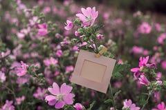 Ejecución en blanco del marco en las flores rosadas al aire libre Imagen de archivo