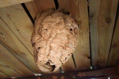 Ejecución gigante de la colmena de la avispa del techo Foto de archivo libre de regalías