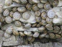 Ejecución inactiva de los caracoles Imágenes de archivo libres de regalías