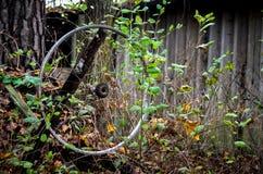 Ejecución perdida de la rueda de la bici en plantas Foto de archivo libre de regalías