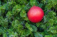 Ejecución roja de la bola de la Navidad en árbol Cierre para arriba Imagen de archivo libre de regalías