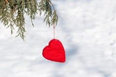 Ejecución roja del corazón del día de tarjetas del día de San Valentín en árbol de pino Imagen de archivo libre de regalías