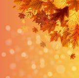 Ejemplo abstracto Autumn Happy Thanksgiving Background del vector con Autumn Leaves que cae Fotos de archivo