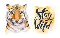 Ejemplo aislado animal del tigre tropical de la acuarela, animales axotic del gato salvaje monstera de la planta, ilustraciones d libre illustration