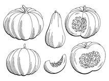 Ejemplo aislado blanco negro gráfico del bosquejo de la calabaza Imagen de archivo libre de regalías