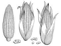 Ejemplo aislado blanco negro gráfico del bosquejo del maíz Imágenes de archivo libres de regalías