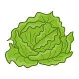 Ejemplo aislado de la col verde libre illustration