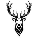 Ejemplo aislado de una cabeza de los ciervos Foto de archivo