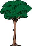 Ejemplo aislado del árbol alto ilustración del vector