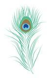 Ejemplo aislado pluma del vector del pavo real