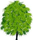 Ejemplo aislado verde oscuro del árbol Fotos de archivo libres de regalías