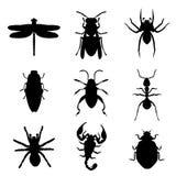 Ejemplo animal del vector del negro del icono de la silueta del insecto del insecto Imagen de archivo libre de regalías