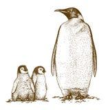 Ejemplo antiguo del grabado de tres pingüinos de rey Fotografía de archivo libre de regalías