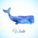 Ejemplo azul de la ballena de la acuarela libre illustration