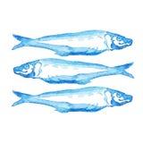 Ejemplo azul exhausto de la acuarela de la mano al grupo de pescados atlánticos de la caballa en el fondo blanco imagen de archivo libre de regalías