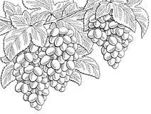 Ejemplo blanco del bosquejo del negro gráfico de la rama de la fruta de las uvas Fotos de archivo