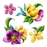 Ejemplo botánico, flores tropicales hermosas, clip art floral, sistema de elementos del diseño, aislado en el fondo blanco libre illustration