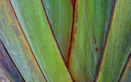 Ejemplo claro del fondo de las ramas de la planta imagen de archivo