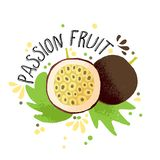 Ejemplo coloreado drenaje de la fruta de la pasión de la mano del vector Fruta de la pasión amarilla de Brown con pulpa, huesos d foto de archivo libre de regalías