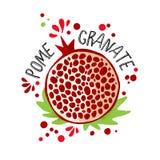 Ejemplo coloreado drenaje de la granada de la mano del vector Granadas p?rpuras, rojas con los huesos de la pulpa y de la fruta y fotografía de archivo