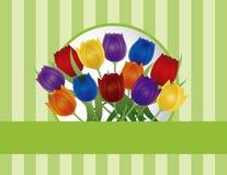 Ejemplo colorido de la tarjeta de felicitación de los tulipanes Fotos de archivo
