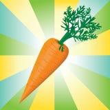 Ejemplo colorido del vector del detalle de la zanahoria Fotos de archivo libres de regalías