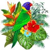 Ejemplo colorido exótico del vector del pájaro del loro de Lorikeet del arco iris stock de ilustración