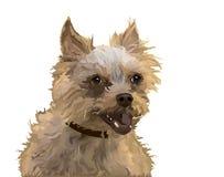 Ejemplo con el perro divertido Fotografía de archivo