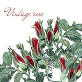 Ejemplo con las flores color de rosa dibujadas mano del vector para el diseño Imagen de archivo