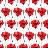 Ejemplo con las flores de la amapola aisladas en el fondo blanco Fondo del verano Fotografía de archivo libre de regalías