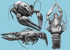 Ejemplo con los cánceres de diversas formas stock de ilustración