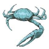 Ejemplo con un cangrejo-fantasma azul grande del mar dibujado a mano en un fondo ligero SP de Ocypode Imagen de archivo libre de regalías
