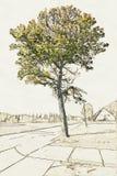 Ejemplo creativo de un árbol viejo delante del campo ancho stock de ilustración