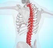 ejemplo 3d del dolor de espalda esquelético humano ilustración del vector