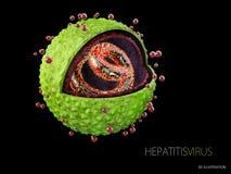 ejemplo 3d del virus de hepatitis Estructura del virus de hepatitis Fotografía de archivo libre de regalías