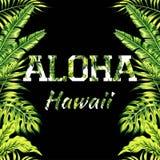 Ejemplo de Aloha Hawaii, fondo del espejo de las hojas de palma ilustración del vector