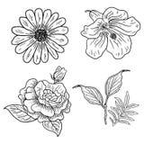 Ejemplo de cuatro flores clásicas libre illustration