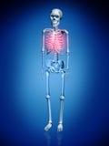 Ejemplo de Digitaces de un Skelton Imagen de archivo