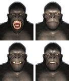 Ejemplo de Gorilla Ape Face Expression Emotion aislado Imagen de archivo libre de regalías