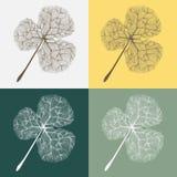Ejemplo de hojas en diversos fondos del color Fotos de archivo libres de regalías
