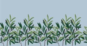 Ejemplo de hojas ejemplo - olivos stock de ilustración