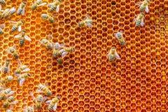 Ejemplo de la abeja de los panales Imágenes de archivo libres de regalías