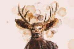 Ejemplo de la acuarela como el retrato de un ciervo imagen de archivo libre de regalías