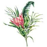 Ejemplo de la acuarela con el protea de rey y las hojas de palma Flor pintada a mano y rama rosadas aisladas en blanco stock de ilustración