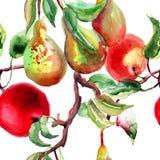 Ejemplo de la acuarela de peras y de la manzana Imagen de archivo