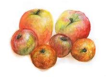 Ejemplo de la acuarela del jardín de Apple foto de archivo