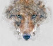 Ejemplo de la acuarela del lobo Foto de archivo libre de regalías