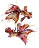 Ejemplo de la acuarela del pez de colores stock de ilustración