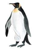 Ejemplo de la acuarela del pingüino del pájaro en el fondo blanco ilustración del vector