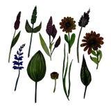 Ejemplo de la acuarela de hierbas ilustración del vector